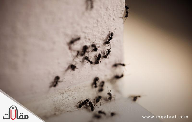كيفية التخلص من النمل