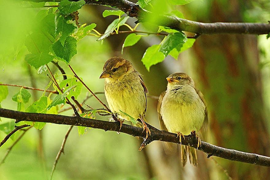 معلومات عن العصافير