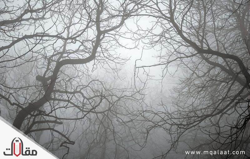 ما هي شجرة الزقوم