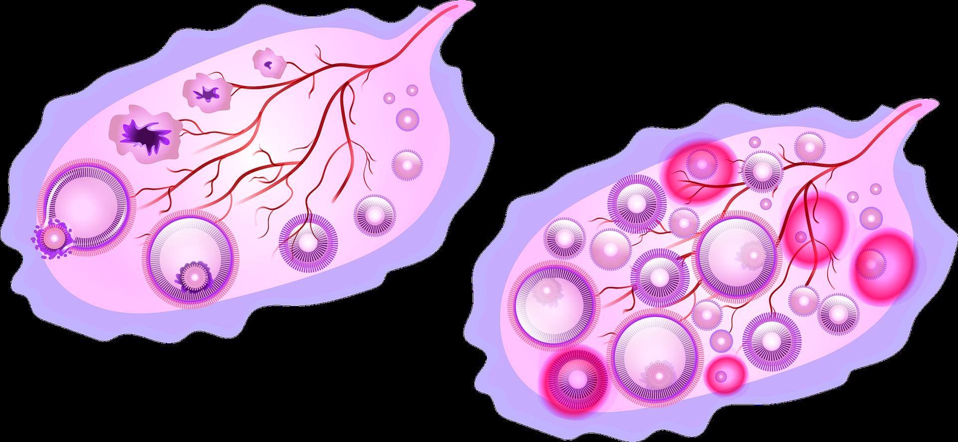 طرق طبيعية لمنع الحمل