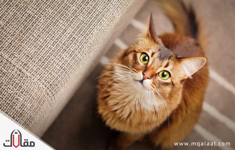 معلومات عن القطط موقع مقالات