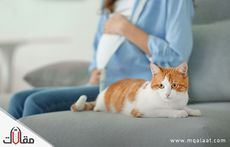 تأثير القطط على الحامل