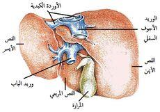 اعراض امراض الكبد