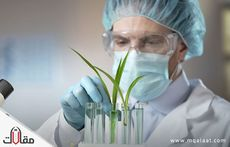 بحث عن الهرمونات النباتية